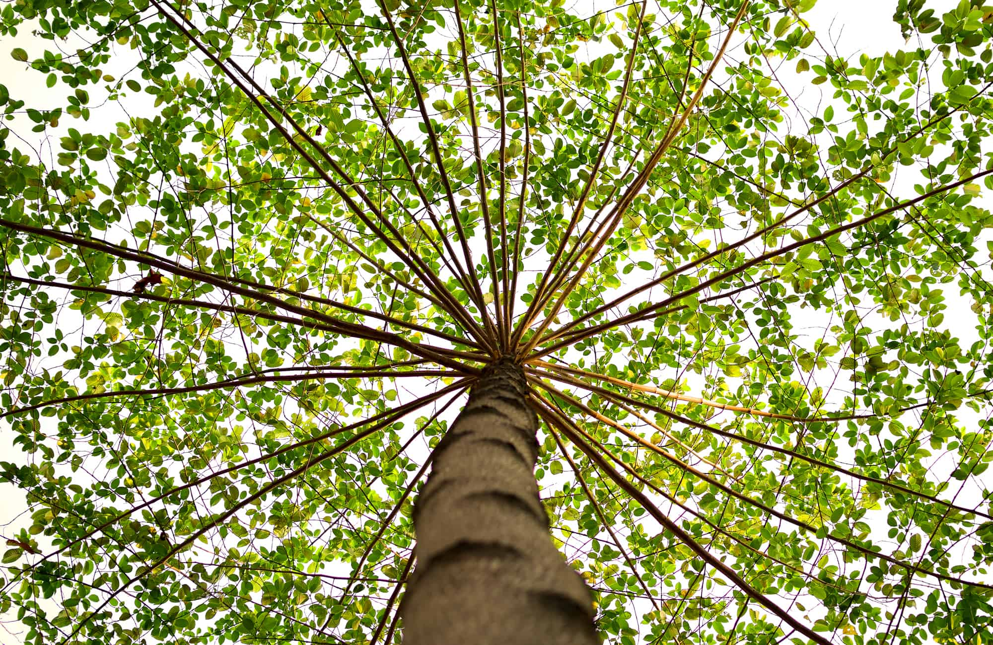 tree-branch-leaves-sky
