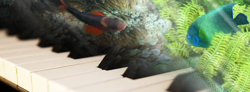 PianoFish_Web
