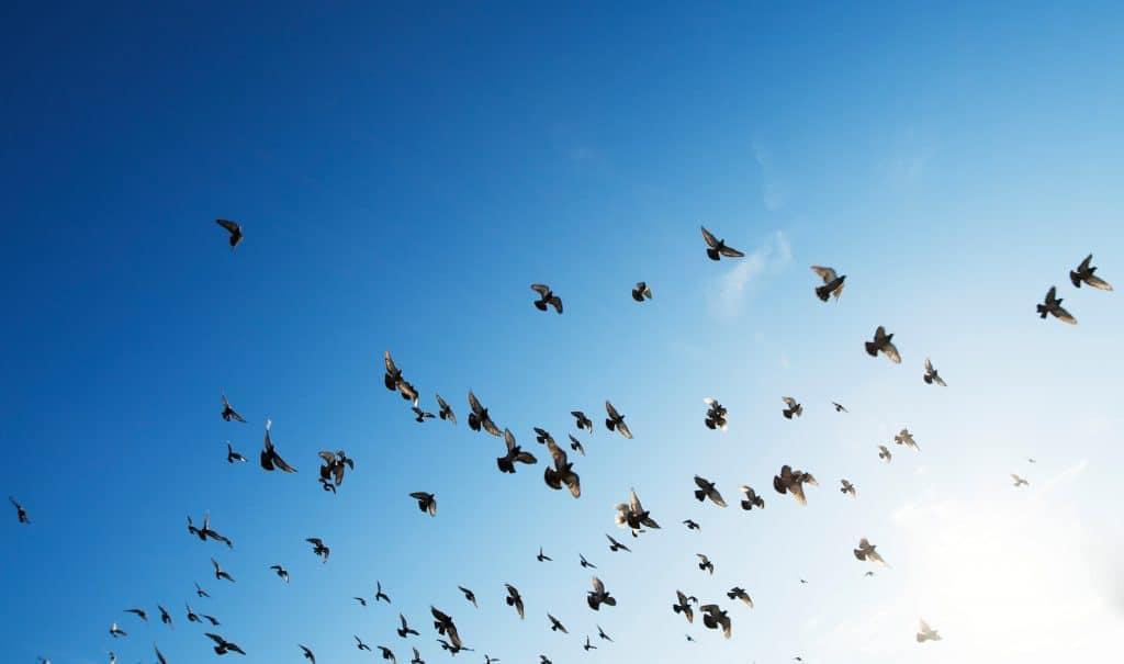 sky-birds-minimal-blue